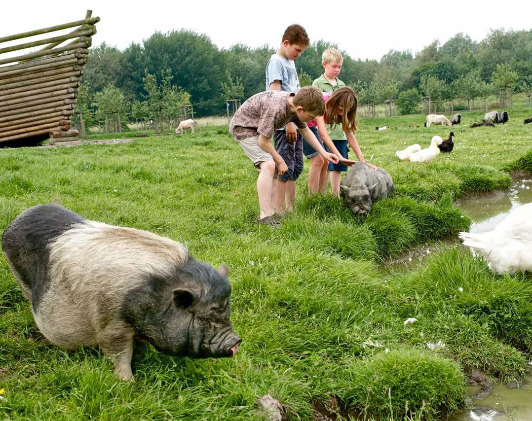 Ökowerk_Bildmotiv_Projekte_Kinder streicheln Schwein an der Arche