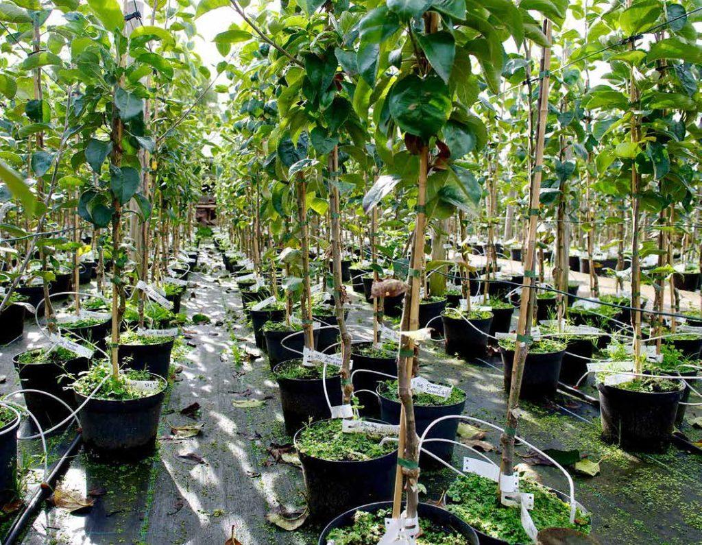 Baumanzucht im Ökowerk